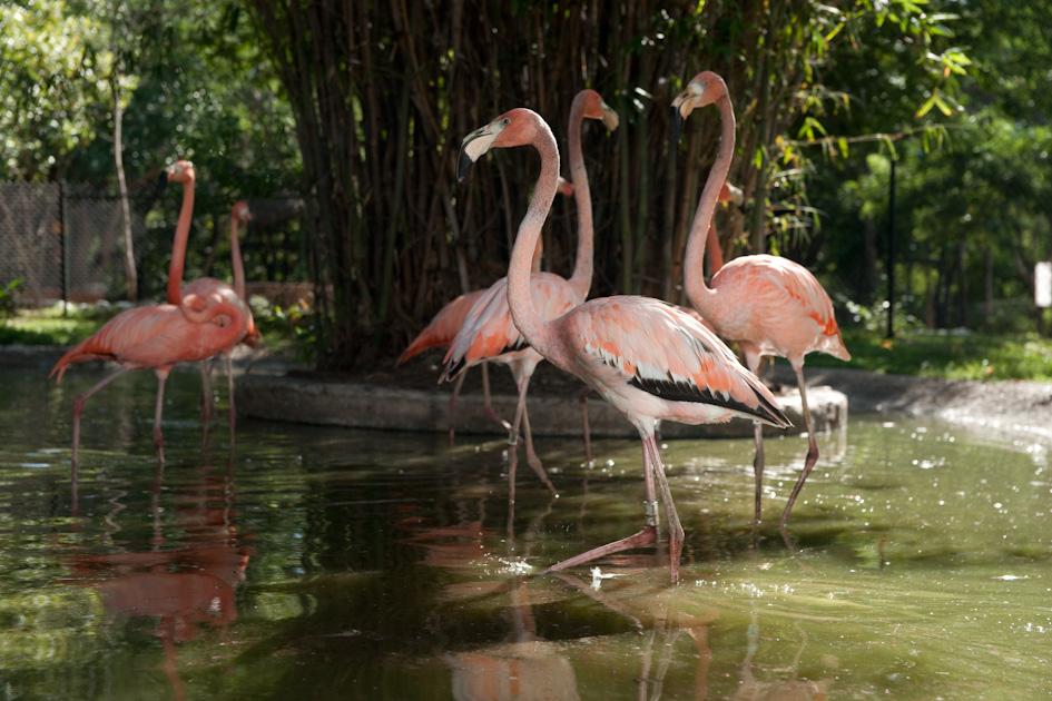 Maravíllate con los flamingos