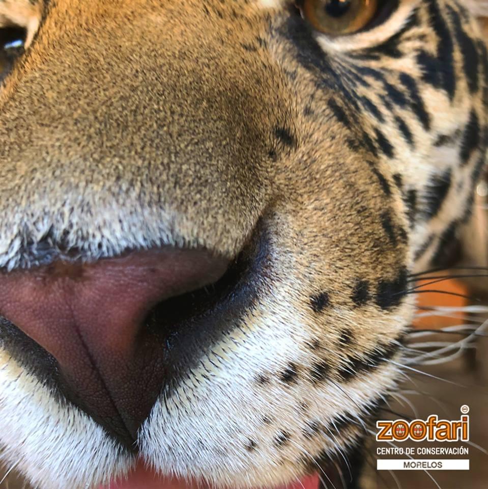 ¡Adéntrate en la vida zoofari! La conservación de las especies a través de la aventura