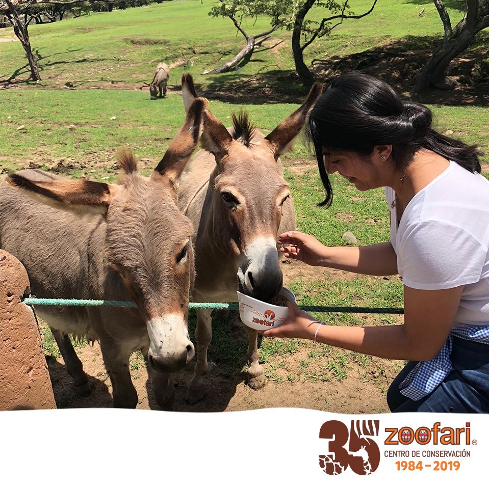 Celebra los 35 años de Zoofari