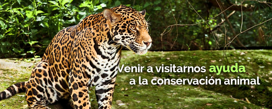 Zoofari. Venir a visitarnos ayuda a la conservación.
