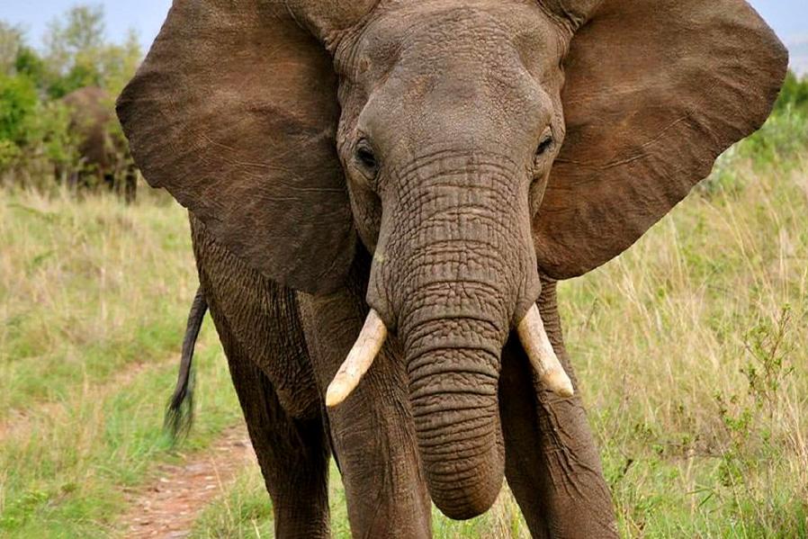 Desde hace 2 años trabajamos en la construcción del nuevo recinto de nuestras elefantas.