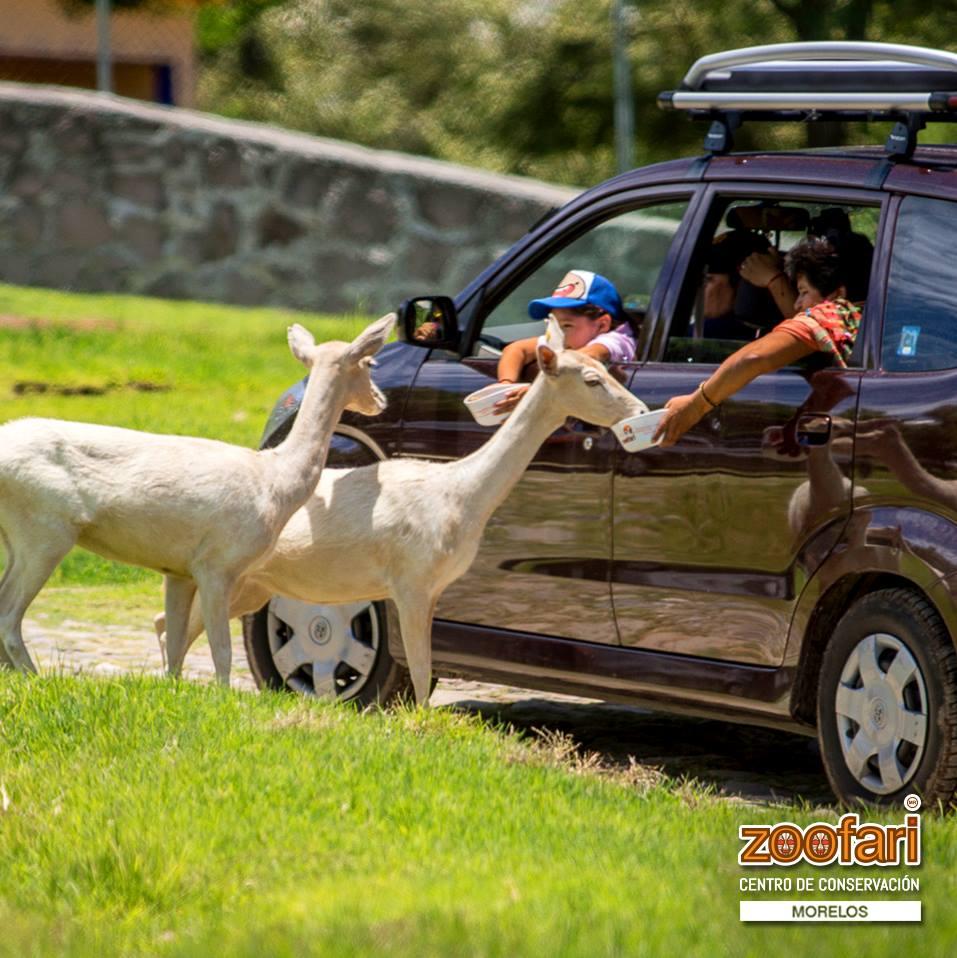 Zoofari y la comunidad