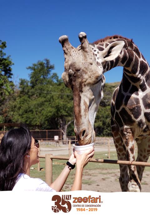 Celebra con Zoofari, 35 años