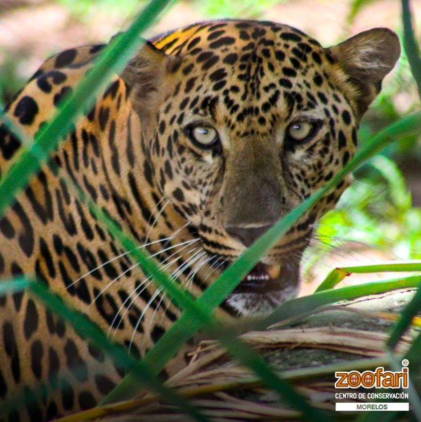 El ciclo sin fin en el Centro de Conservación animal