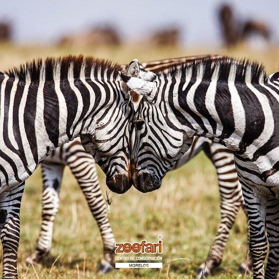 1º concurso de fotografía, Zoofari