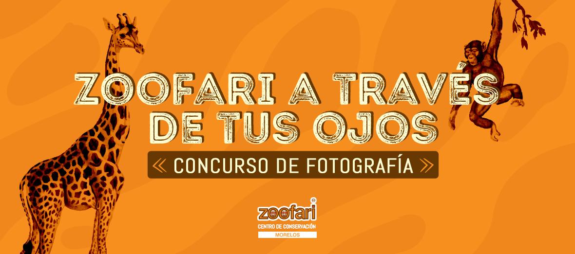 Concurso de foto, Zoofari