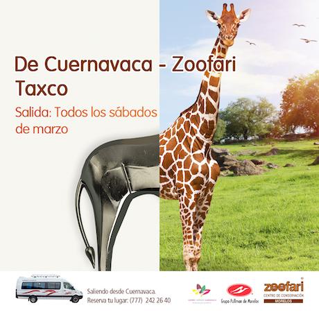 Viaje a Zoofari