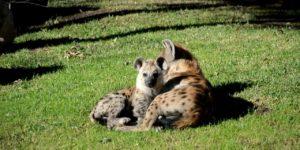 Instinto maternal en Zoofari