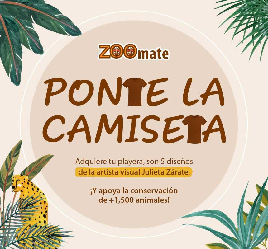 ZOF_2103_SitioTienda_Mobile_Zoomemonos_PlayerasJuliette_860x800px